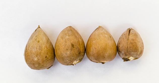 アボカドの種から抽出したエキスをラットの食餌に入れて与えたところ、血糖値の低下が確認できた
