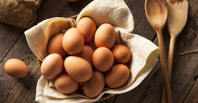 卵はタンパク質の宝庫
