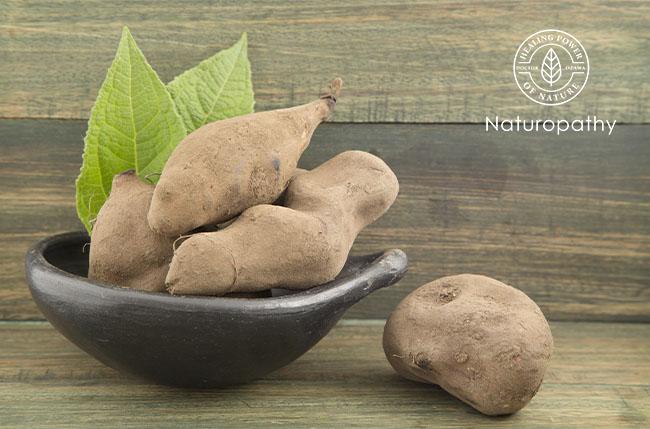 【ヤーコン】 ~天然甘味料&健康食材として積極的に摂取したい南米の伝統根菜~