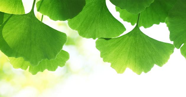 ギンコライドは天然の有機化合物