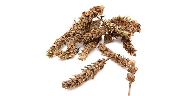 夏枯草、ウツボグサの健康効果