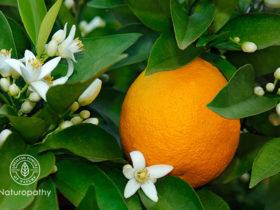 スィートオレンジ