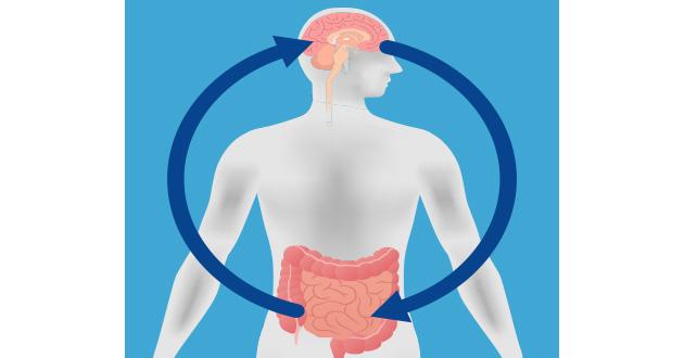 セロトニンと腸