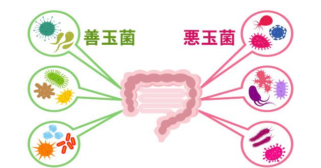 腸内細菌バランス