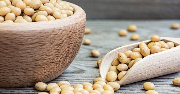 レシチンは大豆に含まれる