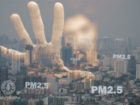 pm2.5の影響を軽減するサプリとは