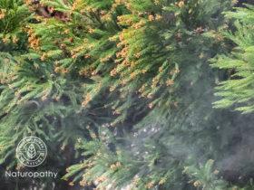 花粉が飛ぶ前に花粉症対策