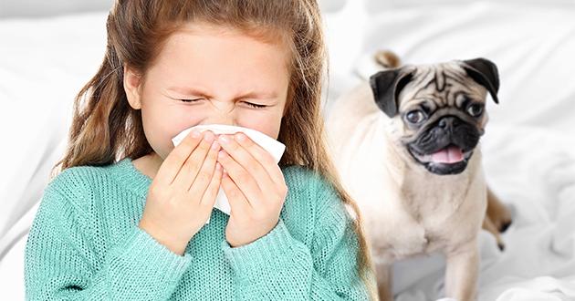 ペットにアレルギーのある方は花粉症の症状にも影響