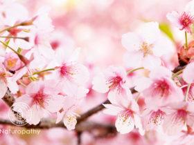 春、桜満開の香り