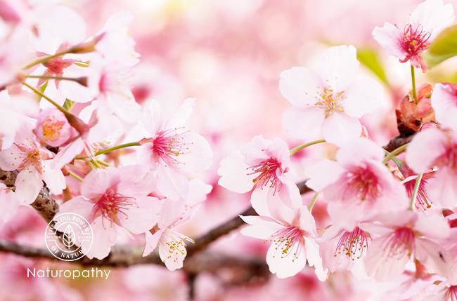 【春彩祭 HARU・SAI・SAI】デコルテ専用!桜の香りのフレグランスオイル作り