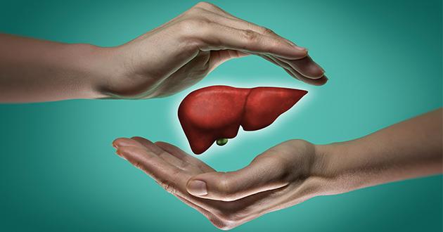 肝臓は多くの働きを持っている