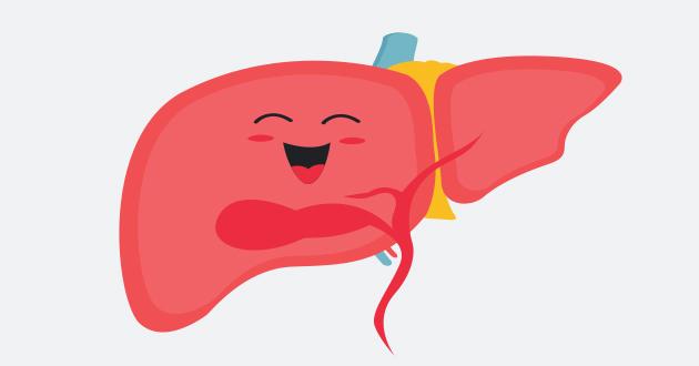 多くの機能を持つ健康な肝臓