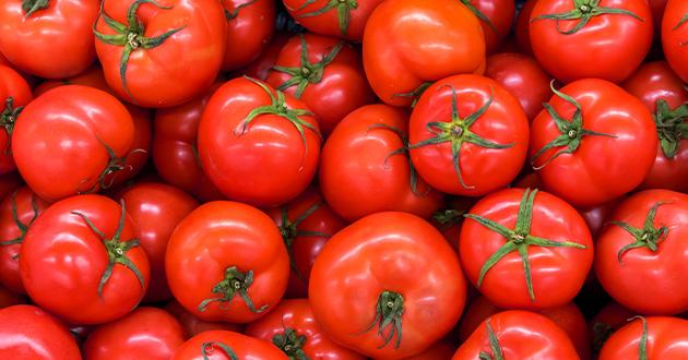 リコピン豊富なトマト