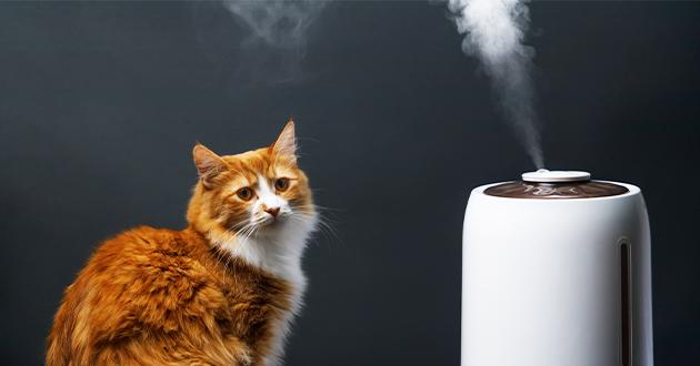 ペットは香りに敏感