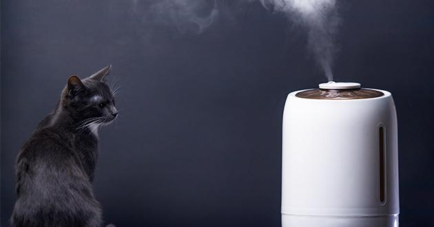 精油はペットにも害を及ぼさないように使用します