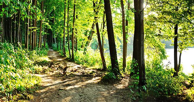空気のキレイな森 森林浴
