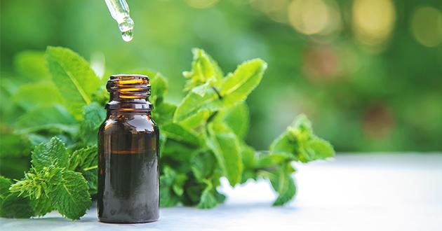 ペパーミントは日常生活に役立つ精油