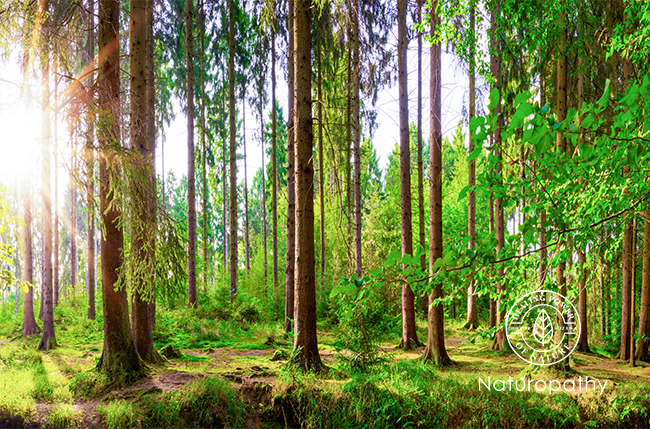 large forest-eyecatch