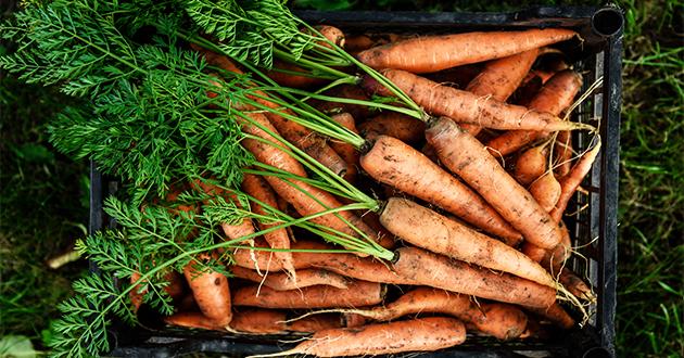 carrots 072121