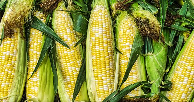 corn 072121