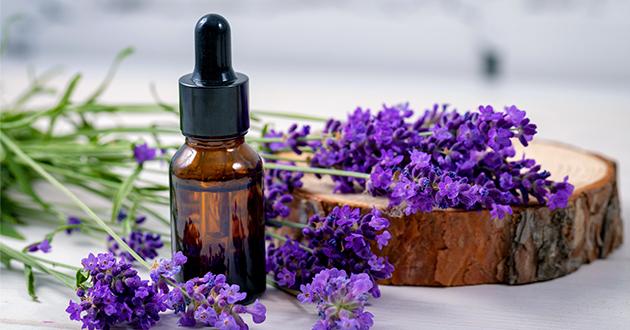 lavender essenial oil
