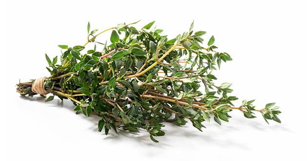 Thymus vulgaris 080421