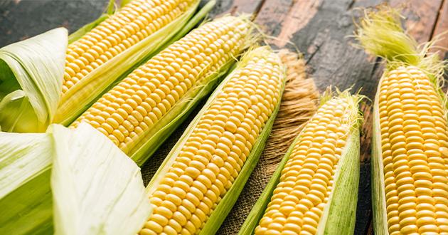 corn 082021